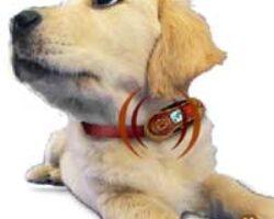 GSM voor huisdieren
