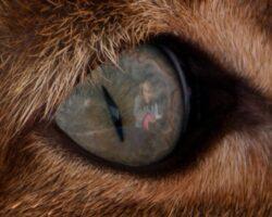 Is het oog de spiegel van de ziel?