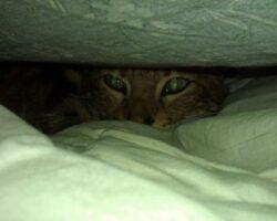 Bedcat is watching you…
