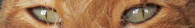 de Kat heeft een Haarbal