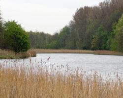 Lente 2008