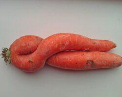 Komieke Karotten
