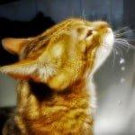 Kat drinkt water