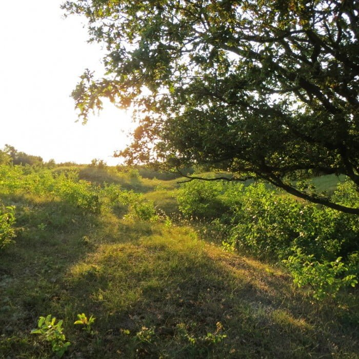 oranjezon bijzonder landschap